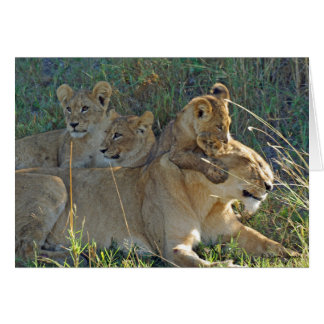 LIONESS WITH THREE CUBS greeting card