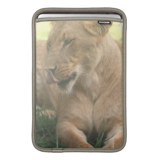 """Lioness with Tongue Out 11"""" MacBook Sleeve"""
