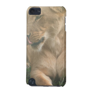 Lioness with Tongue Out iTouch Case iPod Touch 5G Covers