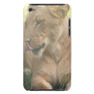 Lioness with Tongue Out iTouch Case iPod Case-Mate Cases