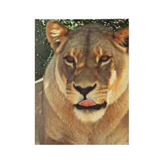 Lioness Wood Poster