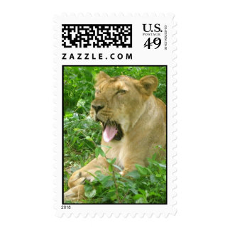 lioness yawn2 stamp