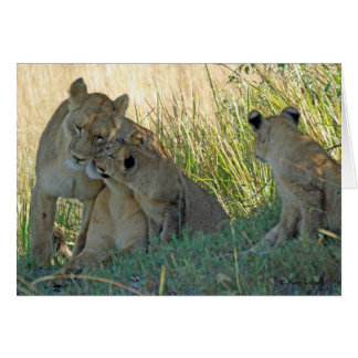 LIONESSES AND CUBS GREETING CARD