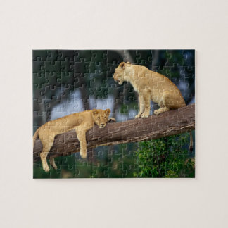 Lionesses in a tree jigsaw puzzle