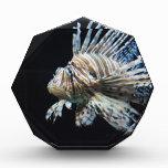 Lionfish Acrylic Award