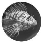 Lionfish blanco y negro hermoso plato