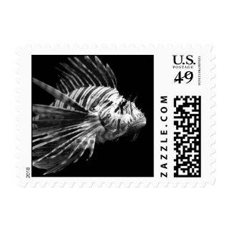 Lionfish blanco y negro hermoso envio