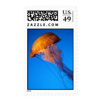 Lionfish blanco y negro hermoso sellos
