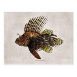 Lionfish del vintage postal