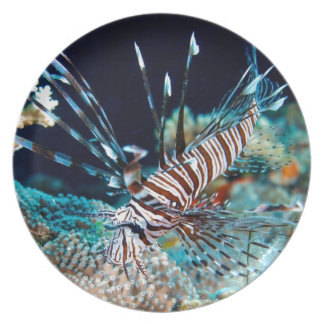 Lionfish on the Great Barrier Reef Dinner Plate