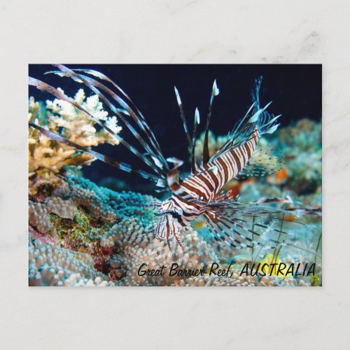Lionfish on the Great Barrier Reef Postcard