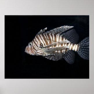 Lionfish Impresiones