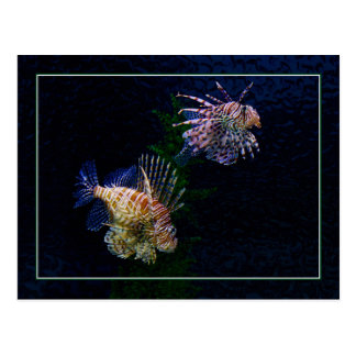 Lionfish Pair Postcards