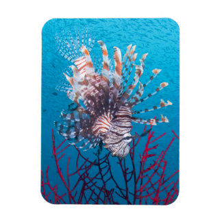 Lionfish Photo Magnet