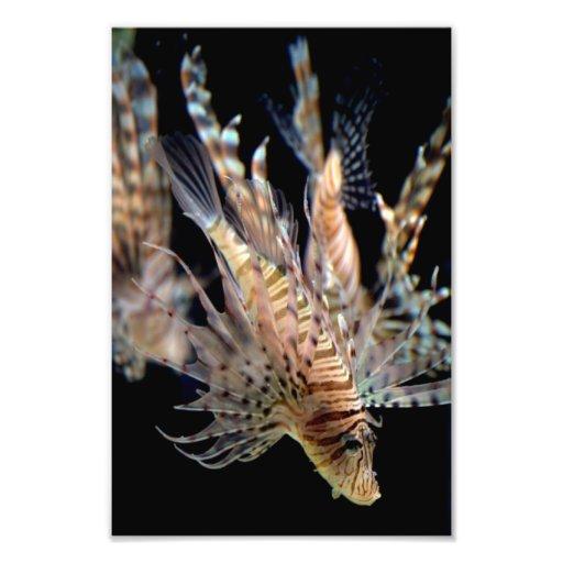 Lionfish Photo Print