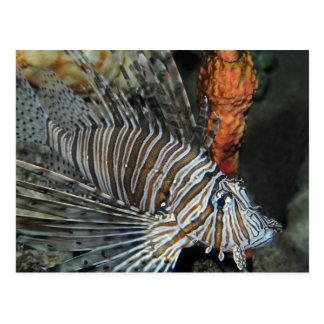 Lionfish Postcard