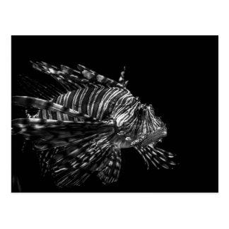 Lionfish – Postcard