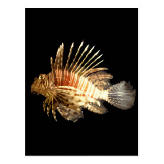 Lionfish Post Card