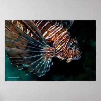 Lionfish Póster