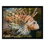 Lionfish Poster Posters