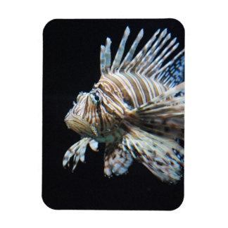 Lionfish Rectangle Magnet