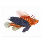 Lionfish - Pterois - grabado de la antigüedad de Postal