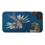 Lionfish (Pterois volitans) swimming over Case-Mate iPhone 4 Cases