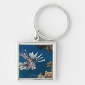 Lionfish (Pterois volitans) swimming over Silver-Colored Square Keychain