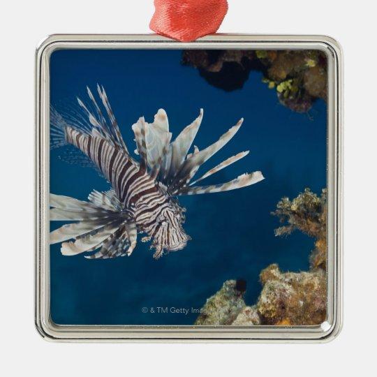 Lionfish (Pterois volitans) swimming over Metal Ornament