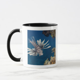 Lionfish (Pterois volitans) swimming over Mug