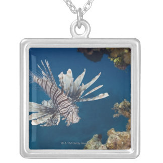 Lionfish (Pterois volitans) swimming over Silver Plated Necklace