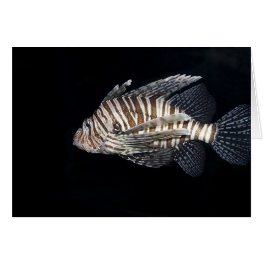 Lionfish Stationery Note Card