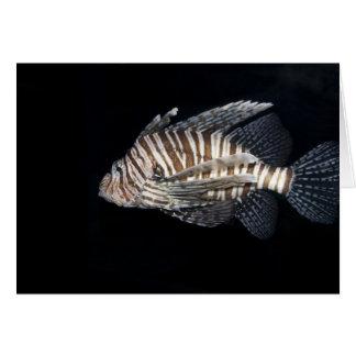 Lionfish Tarjetas