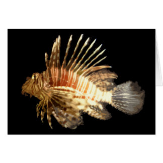 Lionfish Felicitaciones