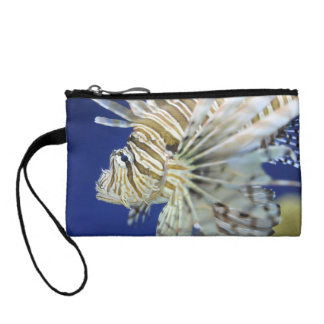 Lionfish tropical