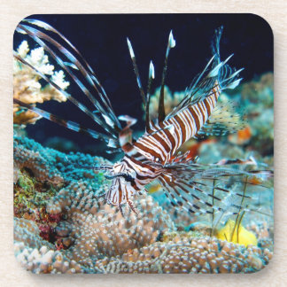 Lionfishon the Great Barrier Reef Drink Coasters