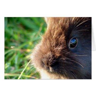 Lionhead Bunny card