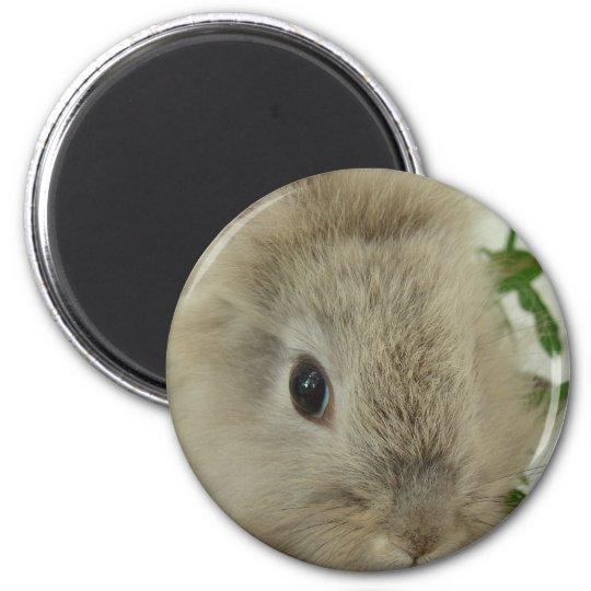 Lionhead Bunny Magnet