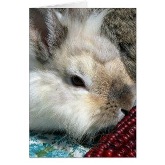 Lionhead Rabbit and Indian Corn Card