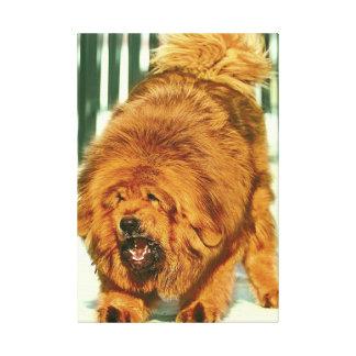 Lion'Head Tibetan Manstiff  Stretched Canvas Print