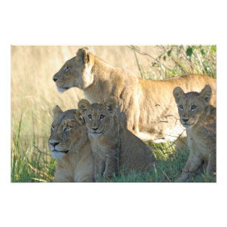 LIONS AND CUBS ART PHOTO