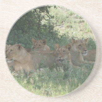 lions drink coaster