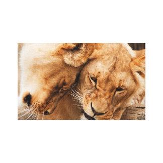 Lions couple canvas print