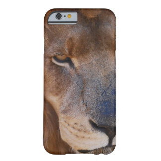 Lions History Barely There iPhone 6 Case