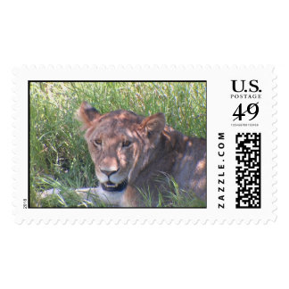 Lions in Africa Postage Stamps