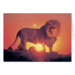 Lions in the Wild Tees, Cards and GIfts
