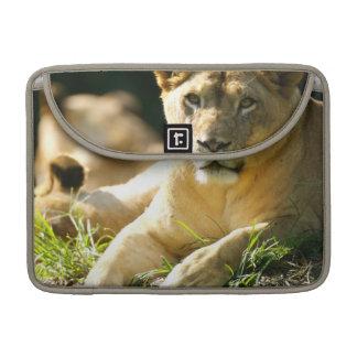 Lions MacBook Pro Sleeve
