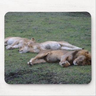 Lions Napping - Mousepad