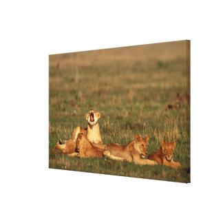 Lions on a savanna canvas print