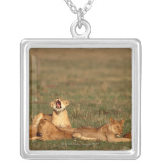 Lions on a savanna silver plated necklace